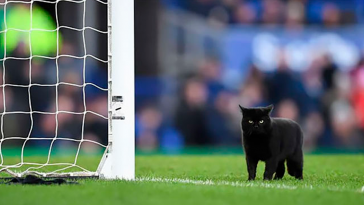 Black Cat Enters A Soccer Match And Unsurprisingly Refuses To