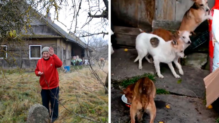 Shelter Rescues 11 Dogs From Terrible Living Conditions And Give